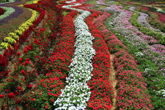 Müllgruben von Blumen Lizenzfreies Stockfoto