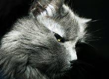 Mündung cat Lizenzfreie Stockfotografie