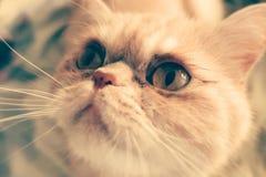 Mündung einer Katze Lizenzfreie Stockbilder