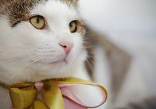 Mündung einer weißen und gestreiften Katze mit einem Bogen lizenzfreie stockbilder
