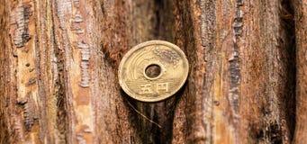 Münze, Holz, Stockfoto