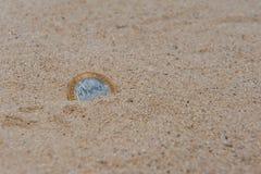 Münze im Sand Stockfoto