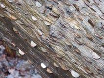Münzen hämmerten in einen gefallenen Baum lizenzfreies stockbild
