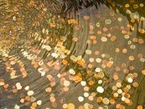 Münzen im Gartenpool Stockbild