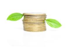 Münzen mit grünen Blättern Lizenzfreies Stockbild