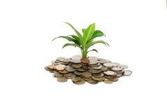 Münzen und Anlage Lizenzfreies Stockfoto