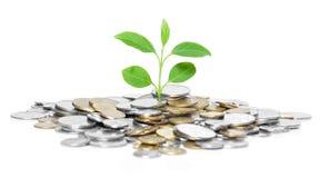 Münzen und Grünpflanze Stockfotos
