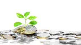 Münzen und Grünpflanze Stockbilder