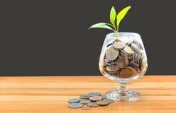 Münzen und Samen in der klaren Flasche Stockfotografie