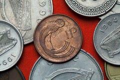 Münzen von Irland Keltischer dekorativer Vogel Stockfoto