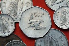 Münzen von Irland waldschnepfe Lizenzfreie Stockfotografie
