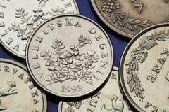 Münzen von Kroatien Stockfoto