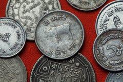 Münzen von Nepal Hinduistische heilige Kuh Stockbilder