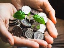 Münzen von UAE Münzen und Grünpflanze in den Palmen Lizenzfreie Stockbilder
