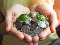 Münzen von UAE Münzen und Grünpflanze in den Palmen Stockbild