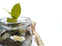 Münzen wachsen wie Bäume in Verbindung stehen, die investieren, um Geld zu verdienen, wie ein Baum zu wachsen stockbild