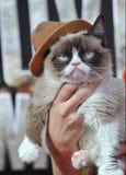 Mürrische Katze stockfotos