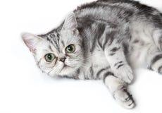Mürrische Katze Lizenzfreie Stockbilder