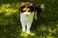 Mürrische Katze Lizenzfreie Stockfotos