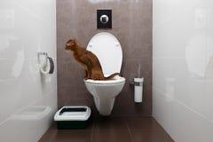 Mądry Abisyński kot używa toaletowego puchar obraz royalty free