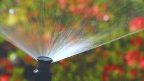 Mądry ogród z w pełni automatycznym systemem irygacyjnym, wodne azalie zbiory wideo