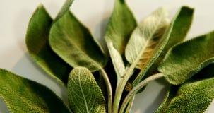 Mądry ziele w tacy 4k zdjęcie wideo