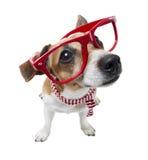 Mądrze moda pies Fotografia Royalty Free