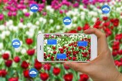 Mądrze Uprawia ziemię rolnictwa pojęcie Używać chmurę, Duży dane, augment Obrazy Stock