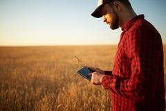 Mądrze uprawia ziemię używa nowożytne technologie w rolnictwie Obsługuje agronoma rolnika z cyfrowym pastylka komputerem w banatc obraz royalty free