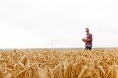 Mądrze uprawia ziemię używa nowożytne technologie w rolnictwie Obsługuje agronoma rolnika z cyfrowym pastylka komputerem na tle Zdjęcia Royalty Free