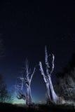 męża gwiazdowa śladów drzewa żona Fotografia Royalty Free