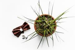 Mężczyzn akcesoria, łęku krawata odgórny widok zdjęcie stock