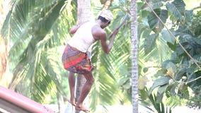 Mężczyzn stojaki na dachowych krawatach wtykają palmowi bagażników początki ciąć zdjęcie wideo