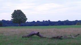 Mężczyzna bieg w parku Zdjęcie Stock