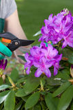 Mężczyzna bierze opiekę fiołkowi kwiaty Obrazy Stock