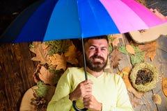 Mężczyzna brodaty kłaść na drewnianym tle z pomarańczowych liści odgórnym widokiem Dżdżysty prognozy pogody pojęcie Spadek atmosf fotografia stock