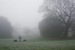 Mężczyzna chodzi jego psy w mgle Zdjęcia Royalty Free