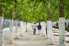 Mężczyzna chodzi przez parkowych Jardin Du Mont des sztuk, Bruksela Obrazy Stock