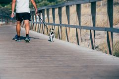 Mężczyzna chodzi psa w drewnianym stopa moscie plażą obrazy stock