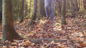 Mężczyzna chodzi w kierunku kamery w jesień lesie w zwolnionym tempie zbiory wideo