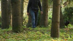 Mężczyzna chodzi w lasach z jego psem, jesień Pojęcie zdrowy styl życia zbiory