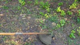Mężczyzna chodzi z gazonu kosiarzem i kosi trawy przy pogodnym letnim dniem zdjęcie wideo