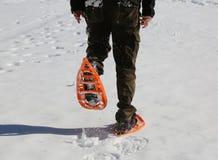 Mężczyzna chodzi z pomarańczowymi karplami i sztruks dyszy na śniegu Obrazy Stock