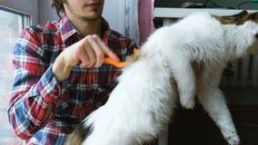 Mężczyzna czesze za białym kocie Mężczyzna czesze zwierzęcia domowego włosianego obsiadanie na podłodze w domu zbiory