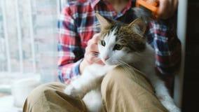 Mężczyzna czesze za kocie Mężczyzna czesze kota zwierzęcia domowego obsiadanie na podłodze w domu zdjęcie wideo
