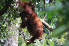 Mężczyzna dżungla Obraz Royalty Free