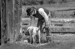 Mężczyzna daje wodzie jego pies Fotografia Royalty Free