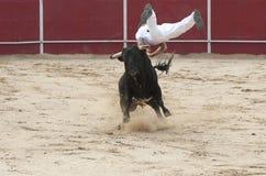 Mężczyzna doskakiwanie na byku w rywalizaci Fotografia Royalty Free