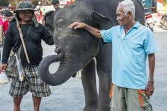Mężczyzna dotyk dziecko słonie na Październiku 28, 2015 w Samutprakarn, Tajlandia Fotografia Stock