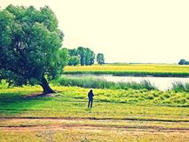 Mężczyzna drzewem Zdjęcie Royalty Free